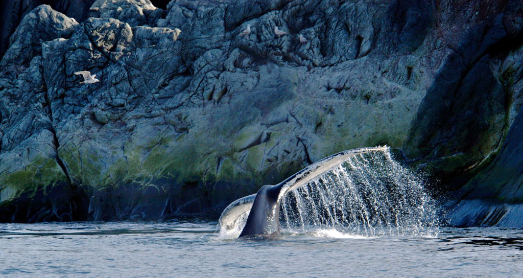 whale-tail-fjord