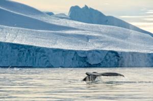 whale-tail-glacier
